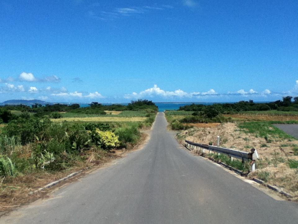 小浜島 うふだき荘 ドラゴンフルーツ、シュガーロード