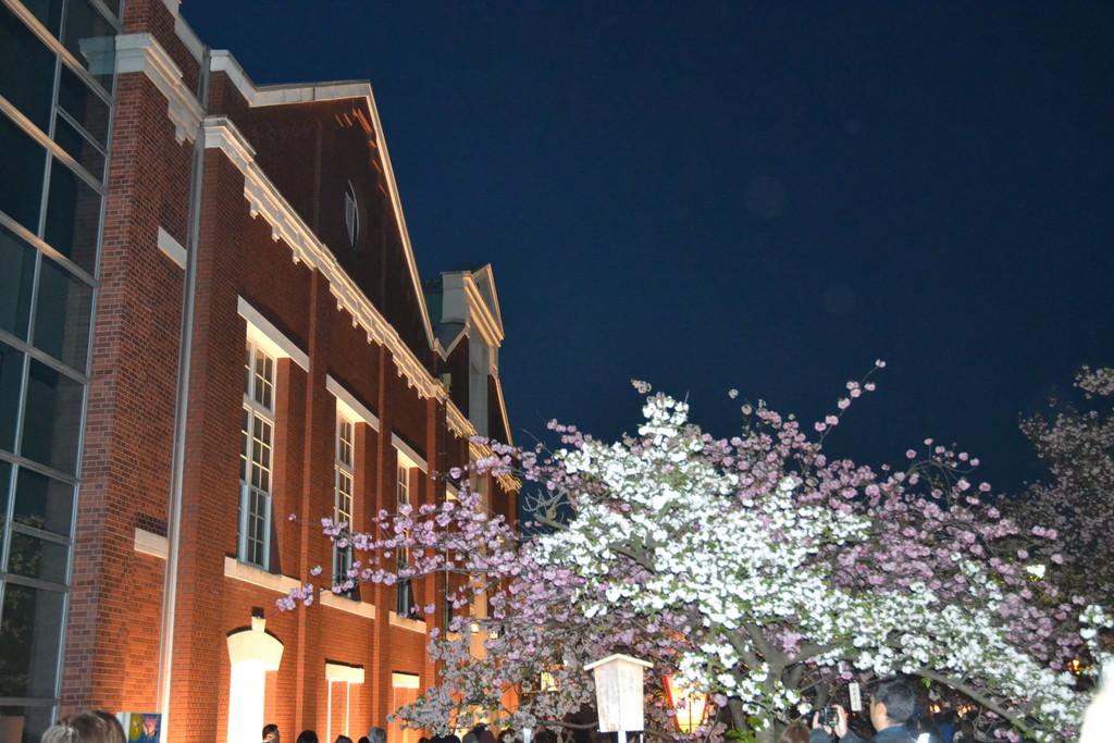 桜の通り抜け 大阪造幣局